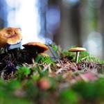 Magic Mushrooms thumbnail
