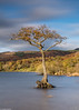 Loch Lomond tree (2) (Donard850) Tags: lochlomond scotland trossachs autumn clouds fall lake longexposure sky tree water