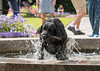 Very wet and sticky (Lowe_Matthew) Tags: dog stick wet fountain oslo capture motion drops norway shutter speed labrador leap fetch canon lightroom