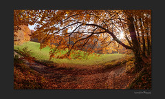 Panorama-of-fallen-gold (OdenWALDfotograf) Tags: wald forest herbst fall autumn colours bunt golden sonne november panorama odenwald hessen