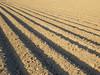 Parallelogramm (Ed Sax) Tags: abstrakt surreal fluchtpunkt perspektive landwirtschaft design intelligent linien horizont muster