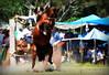 Elton Dhalke (Eduardo Amorim) Tags: gaúcho gaúchos gaucho gauchos cavalos caballos horses chevaux cavalli pferde caballo horse cheval cavallo pferd crioulo criollo crioulos criollos cavalocrioulo cavaloscrioulos caballocriollo caballoscriollos pampa campanha fronteira pelotas riograndedosul brésil brasil sudamérica südamerika suramérica américadosul southamerica amériquedusud americameridionale américadelsur americadelsud cavalo 馬 حصان 马 лошадь ঘোড়া 말 סוס ม้า häst hest hevonen άλογο brazil eduardoamorim gineteada jineteada
