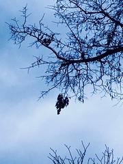 On the sky (basiamarcisz) Tags: november branches trees blue nostalgic tree dust niebo sky