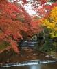 -Autumn- (Ozan Aktas) Tags: autumn forest canon1740 canon5dmark3 longexposure adventure travel iwayado nature landscape