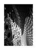 Get Confused (W.Utsch) Tags: abstract minimalism architecture architektur frankfurt mirror bnw schwarzweis blackandwhite monochrome leica monochrom stich curves triangels circles
