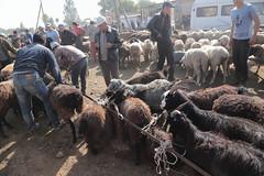 Goats On Ropes (peterkelly) Tags: kyrgyzstan karakol livestockauction asia digital canon 6d centralasiaadventurealmatytotashkent gadventures hat goats goat sheep livestock rope sale