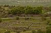 A8842PELOPc (preacher43) Tags: mycenae peloponnesus greece history ancient ruins saronic gulf argos