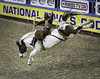 0246937387-95-Cowboy Riding Saddle Bronc at the 2017 National Finals Rodeo-1 (Jim There's things half in shadow and in light) Tags: 2017 america american lasvegas nfr nationalfinals nevada rodeo southwest thomasandmack usa unitedstates action animal cowboy december sports western saddlebronc horse bucking roughstock