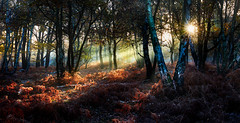 Sherwood Forest Sunlight (Dave Massey Photography) Tags: sherwoodforest nottinghamshire sunlight beams woodland