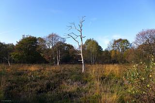 die Drover Heide im November