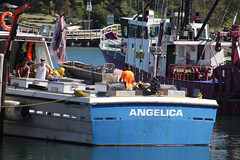 Fishing boats Ulladulla harbour (RossCunningham183) Tags: fishingboat boat ulladulla nsw australia harbour tuna angelica