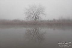 Bare tree reflections