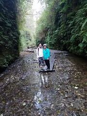 Fern.Canyon.GiangT (redwoodcoaster) Tags: humboldt redwoods redwood coast national park travel california eurekaca