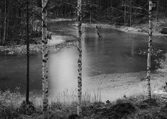 Down by the creek (jondewi52) Tags: black blackandwhite branches cold creek frozen forest filter nofilter fjällsjö ice jämtland landscape nature no norrland outdoor outdoors monochrome photoshop river tree trees winter white