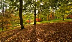 AUTUMN COLOURS (chris .p) Tags: nikon d610 view colours batsford gloucestershire uk autumn 2017 capture october cotswold cotswolds