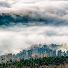 _E4A9961- (Patrick d'Alsace) Tags: france forêt alsace vosges brouillard brume