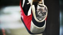 _DSC4429 KO-90 90/1.9 (barryleung28) Tags: cat cats cateye pet catportrait feline gatto gato love sweet tenderness tenerezza tenero gattino dolce adorable cutie kitten happy pets kat katt mio gattuso