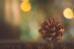 Pinecone (Ro Cafe) Tags: mm macro macromonday stonerhymingzone pinecone garden wood bokeh rustic nature nikkormicro105f28 nikond600