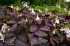 DSC_3064 (facebook.com/DorotaOstrowskaFoto) Tags: ogródbotaniczny kwiaty