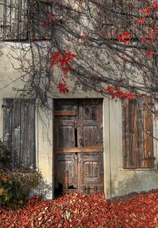 Old door in Autum