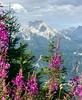 Have a lovely weekend! (sazzyo) Tags: eaglesnest willowherb snow snowonmountains countryside germany berchtesgaden mountains