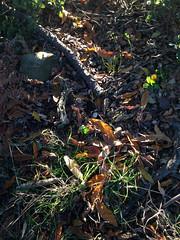 11 (emmess2) Tags: campiglia cinqueterre spezia autumn fall leaves