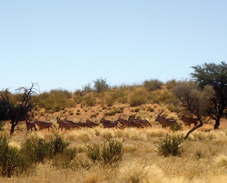 Namibia Hunting Safari 49