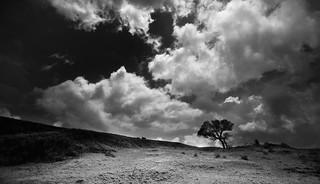 One Tree Hill (Koregad)