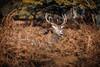 IMG_91736 (Zapkus) Tags: wild nature deer reddeer park forest morning outside animal london zapkus 2017