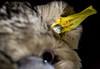 There must be a Button (marionrosengarten) Tags: macromondays macro teddy plush toy animal eye button fur spielzeug tier plüschtier knopf knopfimohr steiff buttons buttonsandbows metal