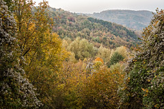 Autumnal forest in the Oltrepò pavese - province of Pavia - Lombardy - Italy (PascalBo) Tags: nikon d500 europe italia italie italy lombardy lombardia lombardie pavia pavie varzi outdoor outdoors oltrepòpavese fall autumn automne forest forêt hill colline pascalboegli