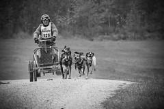 Schlittenhunderennen_154