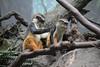 IMG_2074 (neatnessdotcom) Tags: new york city nyc bronx zoo tamron 18270mm f3563 di ii vc pzd canon eos rebel t2i 550d