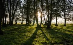 morninglights (chris4all) Tags: chris4all a6500 1835 sunrise sonnenaufgang natur sun rays sonnenstrahlen shadow light schatten licht bäume trees nature landscape landschaft herbst