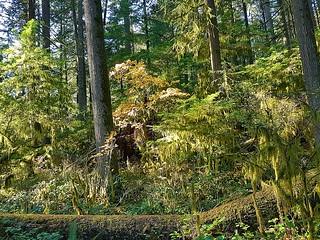 Woods in detail