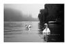 (Cécile75 - Film only) Tags: cigne swan river laseine platais water bw blackwhite blackandwhite bwfp nb noiretblanc noirblanc nature film famille foggy analogue argentique analogique atmosphere animal