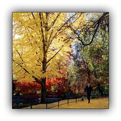 Ballade automnale (Autumn walk) 10 (Jean-Louis DUMAS) Tags: automne autumn feuilles arbre tree colors color couleur paysage landscape parc dxo one ombres lumières explore eau bois lac rivière forêt jardin pelouse pont