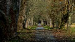Mörfelden Weg (wernerfunk) Tags: hessen