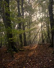 Falling light (Through Bri`s Lens) Tags: sussex ashurst washington lan spithandlelane forest autumncolour brianspicer canon5dmk3 canon1635f4 polariser