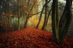 - mystical autumn forest - (verbildert) Tags: forest fog mist autumn red leaves mystical fairytale germany