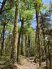 Bajando a Catripulli (Mono Andes) Tags: chile chilecentral regióndelaaraucanía parquenacional parquenacionalvillarrica bosque mountainbike catripulli huililco