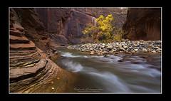 """Zen"" (Viper 78) Tags: narrows zionnationalpark virgin river"