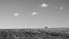 East (cekic photography) Tags: horse cloud blackandwhite monochorme animal landscape east anatolia turkey turkish blacknwhite photography photographers adventure geographic alone turchia kars road solitary abandoned autumn life landscapes black travel silhouette clouds wild