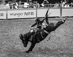 0246937428-95-Cowboy Riding Saddle Bronc at the 2017 National Finals Rodeo-6-Black and White (Jim There's things half in shadow and in light) Tags: 2017 america american lasvegas nfr nationalfinals nevada rodeo southwest thomasandmack usa unitedstates action animal cowboy december sports western saddlebronc blackandwhite bucking roughstock horse