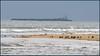 Oystercatchers - Alnmouth - Nov 2017 (696 16.9) (M a r k.............) Tags: markbarratt sparkymarkymb alnmouth sea estuary