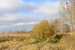 Tolkmicko, Warmia, Poland (LeszekZadlo) Tags: autumn fall landscape landschaft paisaje pejzaż nature natureza naturaleza polska poland polonia pologne polen field trees warmia ermland europe eu ue clouds blue green