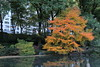 October in the Park (Bob90901) Tags: october park centralpark newyorkcity autumn fall fallcolor fallfoliage manhattan tree sooc rpg90901 thepond water morning canon 6d canonef24105mmf4lisusm 2015 1012