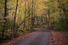 Yellow Turn (Aymeric Gouin) Tags: canada québec mauricie parc park yellow jaune fall autumn automne road path sentier chemin foliage tree arbre wood leaves leaf feuille fujifilm xt2 travel voyage paysage landscape paisaje landschaft aymericgouin aymgo