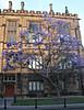 2017 University of Sydney Jacaranda Trees #6 (dominotic) Tags: 2017 flowers jacarandatree purple inthesky bluesky universityofsydneyjacarandatrees history architecture sydney australia