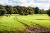 A Clear Path (jameslf) Tags: berkshire flowers greatpark plants savillgardens surrey virginiawater windsor